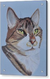 Stanley Acrylic Print by Jo Baner