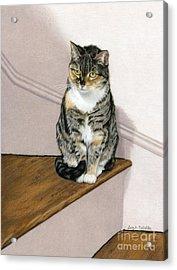 Stanzie Cat Acrylic Print by Sarah Batalka