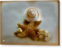 Star And Shells Acrylic Print by Linda Sannuti