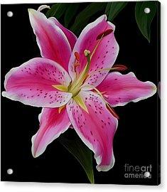 Star Gazed Acrylic Print
