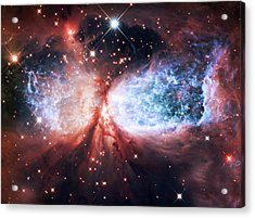 Star Gazer Acrylic Print by Jennifer Rondinelli Reilly - Fine Art Photography