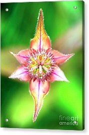 Star In Lurie Garden Acrylic Print by John Rizzuto