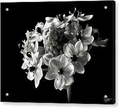 Star Of Bethlehem In Black And White Acrylic Print