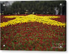 Acrylic Print featuring the photograph Star Of Vietnam by Thanh Tran