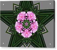 Star Peony Acrylic Print