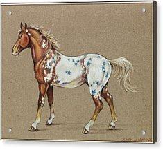 Star Spangled Horse Acrylic Print by Eden Alvernaz