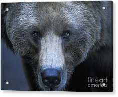 Stare Down Acrylic Print by Sandra Bronstein