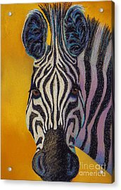 Stare Down Acrylic Print by Tracy L Teeter