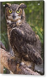 Stare Me Down Baby Acrylic Print by Cheri McEachin