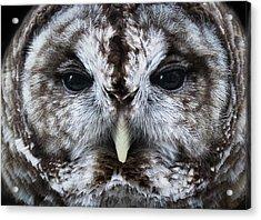 Staredown Acrylic Print