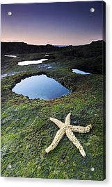 Starfish Acrylic Print by Andre Goncalves