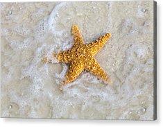 Starfish Acrylic Print by Janet Fikar