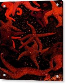 Starfish Mania Acrylic Print by Jess Thorsen