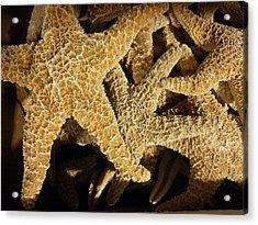 Starfish On Black Acrylic Print