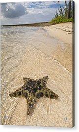 Starfish On The Beach At Starfish Point Acrylic Print by Adam Romanowicz