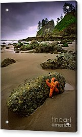 Starfish On The Rocks Acrylic Print by Inge Johnsson