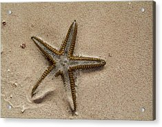 Starfish Partially Buried In White Sand Acrylic Print by Sami Sarkis
