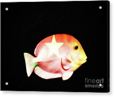 Starfish  Acrylic Print by Steven Digman