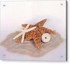 Starfish Still Life Acrylic Print