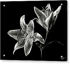 Stargazer Lily In Black And White Acrylic Print by Endre Balogh