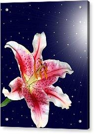 Stargazing Acrylic Print by Kristin Elmquist
