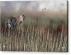 Acrylic Print featuring the photograph Staring Back by Diane Schuster