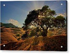 Starlight, California Oak Acrylic Print