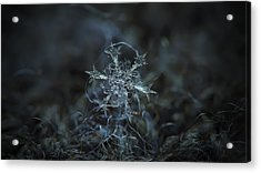 Starlight, Panoramic Version Acrylic Print