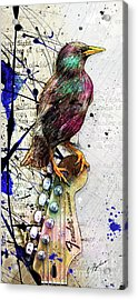 Starling On A Strat Acrylic Print