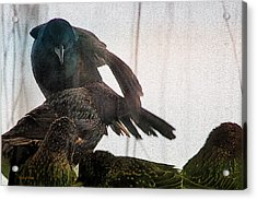 Starlings And The Grackle Acrylic Print by Ericamaxine Price