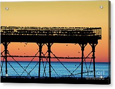 Starlings At Sunset In Aberystwyth Acrylic Print