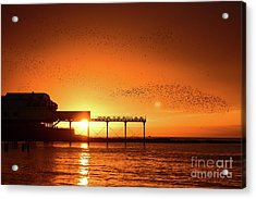 Starlings At Sunset Over Aberystwyth Pier Acrylic Print