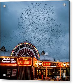 Starlings Over The Neon Lights Of Aberystwyth Pier Acrylic Print