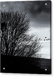 Starlings Roost Acrylic Print by Philip Openshaw
