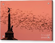 Starlings Sweeping Past Aberystwyth War Memorial Acrylic Print