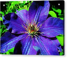 Acrylic Print featuring the photograph Starry Bloom by Susan Carella