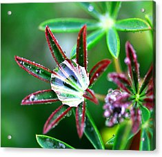 Starry Droplets Acrylic Print