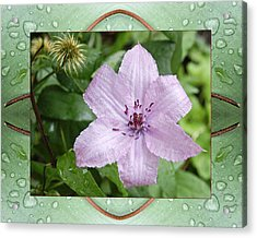 Acrylic Print featuring the photograph Starry Mauve by Bell And Todd