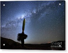 Starry Skies And Puya Raimondii Plant In Flower Acrylic Print
