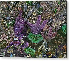 Stars And Anemones Acrylic Print by Wilbur Young