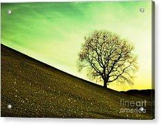 Starting Springtime Acrylic Print by Hannes Cmarits