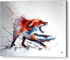 Startled Red Fox Acrylic Print