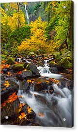 Starvation Creek Falls Acrylic Print