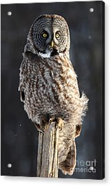 Steadfast In The Wind Acrylic Print