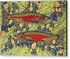 Stealhead Trout Acrylic Print by Debbie Chamberlin