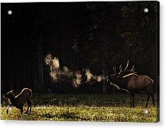 Steamy Breath Elk Bugle Acrylic Print