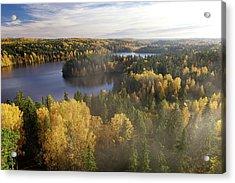 Steamy Forest Acrylic Print by Teemu Tretjakov