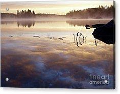 Steamy Morning Gold Acrylic Print by Sandra Updyke
