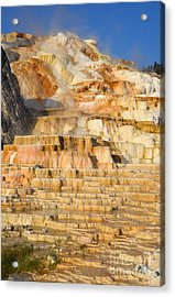 Steamy Travertine Hot Spring Terraces At Mammoth Hot Springs Yellowstone National Park Acrylic Print by Shawn O'Brien