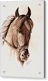 Steely Black Stallion Acrylic Print by Remy Francis